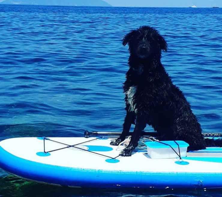 Il cane di Sarcina (Foto Instagram)