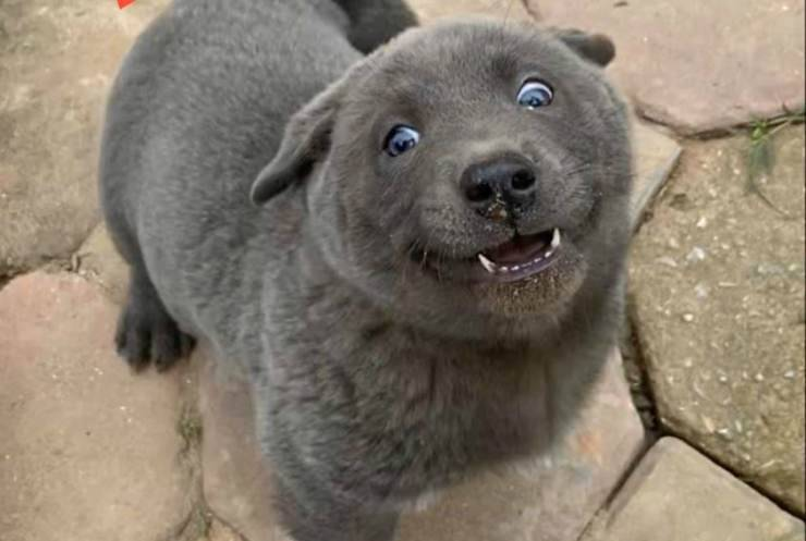 L'allegria del cane (Foto Facebook)