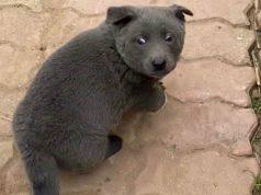 Il cane che sembra un gatto (Foto Facebook)