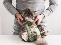 gatto economia