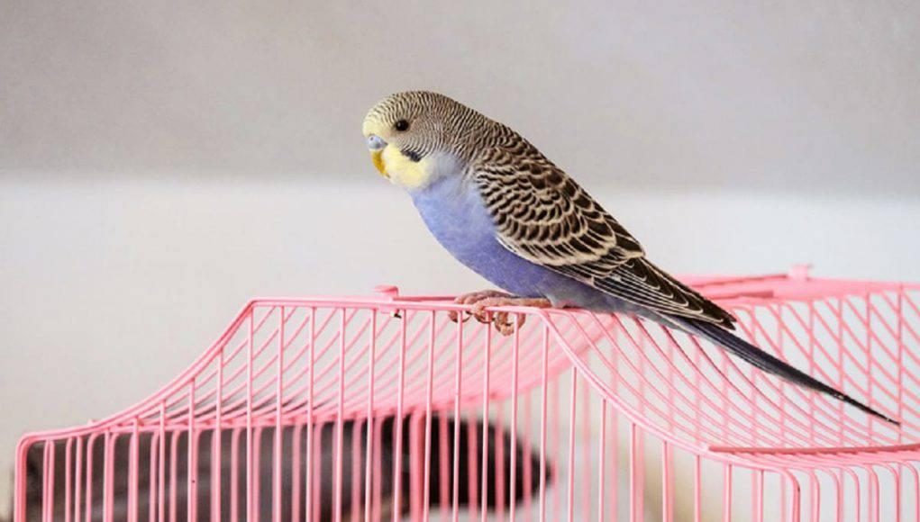 nomi per pappagalli