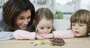 tartarughe aiuto bambini ricoverati