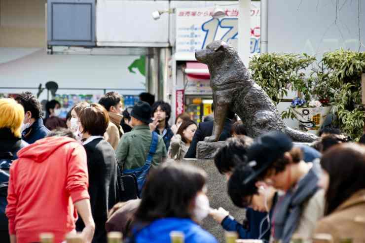 Il cane devoto in un monumento (Foto Getty Images)