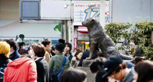 La statua del cane fedele (Foto Getty Images)