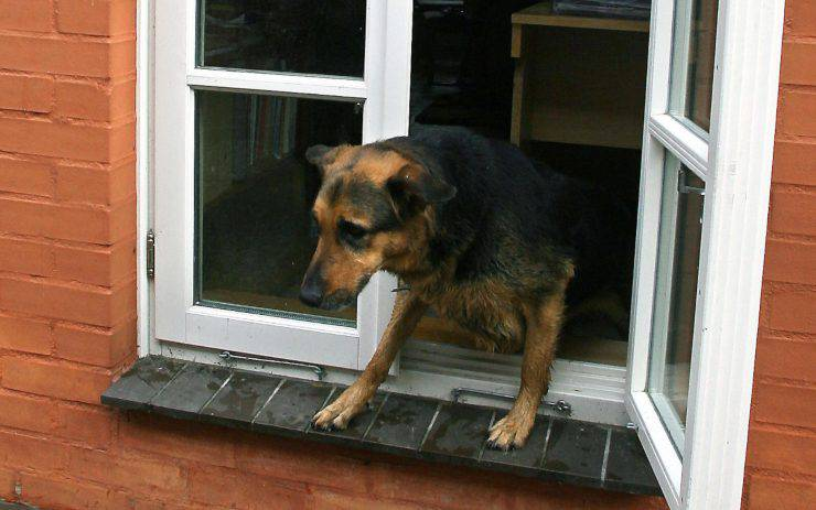 Cane in pericolo davanzale