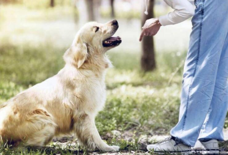 gestire cane terapia obbligatoria