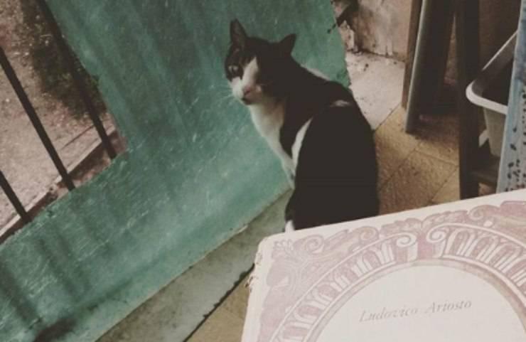 Rancore gatto