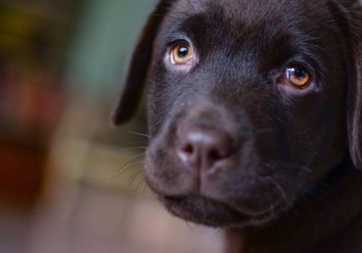 cane sguardo implorante