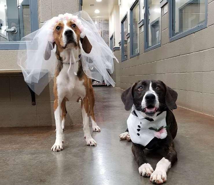 amore cani