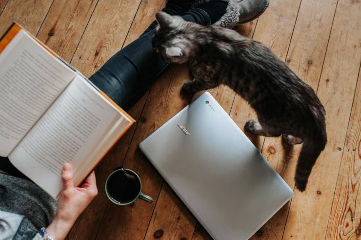 libri sui gatti