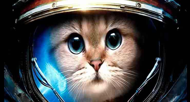 animali nello spazio astronauti a quattro zampe