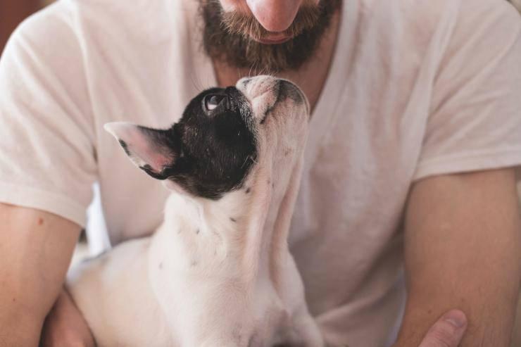 Cane e padrone in simbiosi (Foto Pixabay)