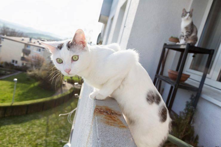 Come rendere il balcone sicuro per il gatto