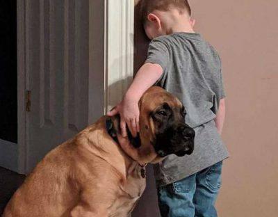 cane bambino punizione