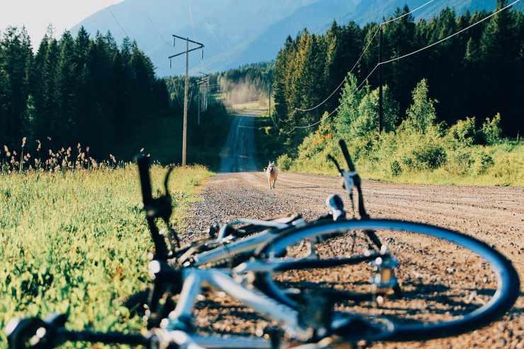 Cane e bicicletta