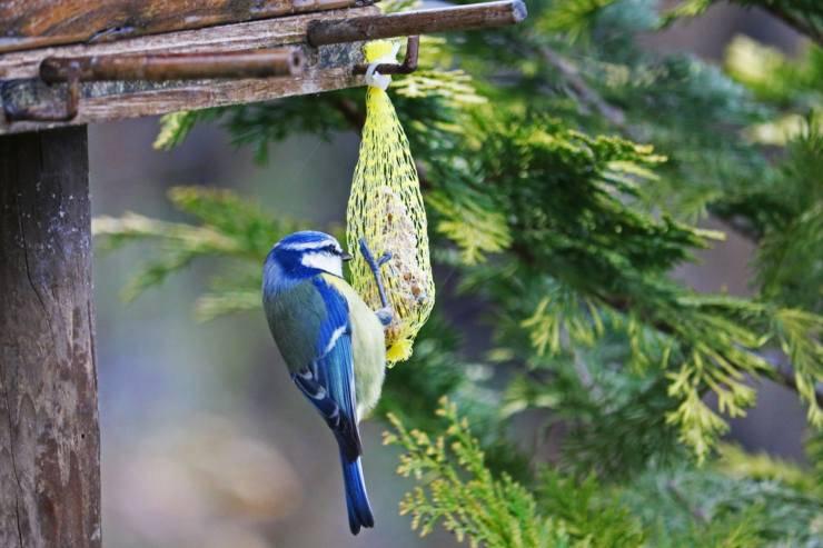 Palle di grasso per uccelli