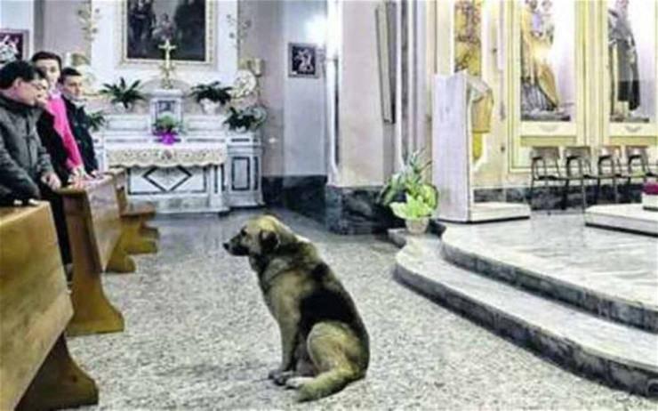 Cane durante la Messa