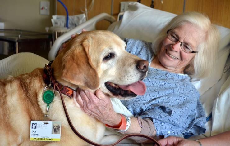 Cane e paziente
