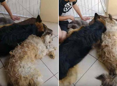 amicizia tra cani