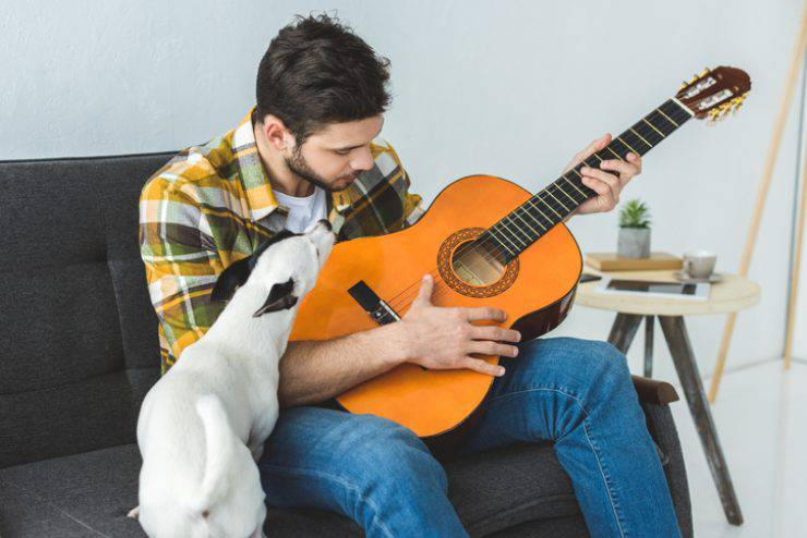 i cani possono riconoscere una canzone