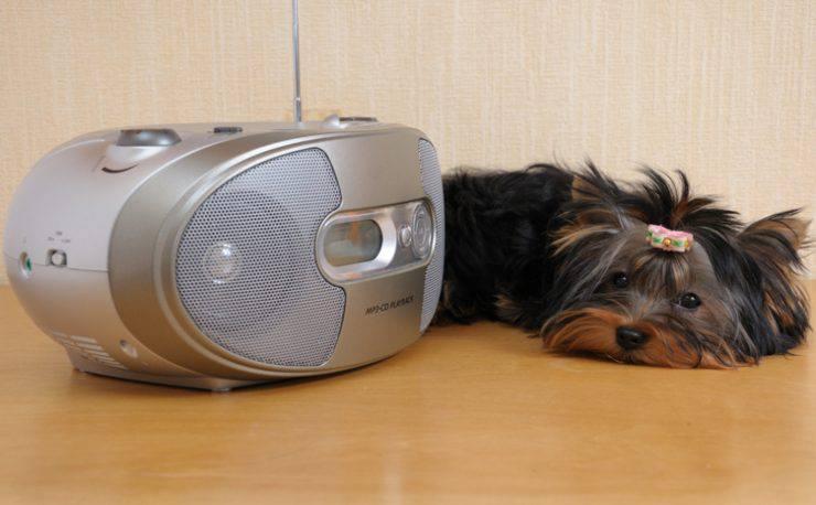 cane musica