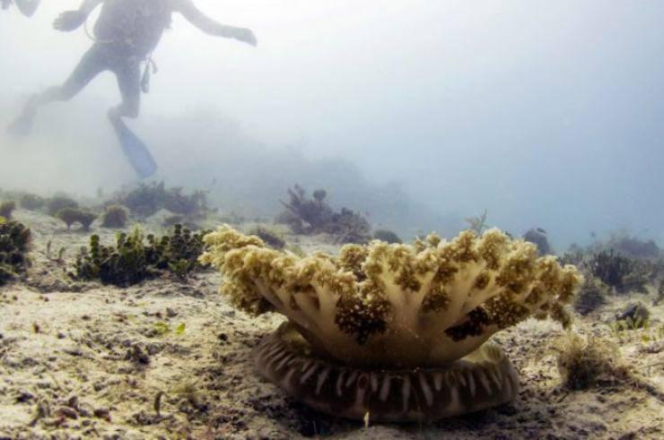 la medusa che punge senza toccare