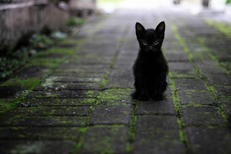 La tenerezza del gattino (Foto Pixabay)
