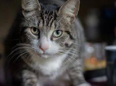 allergia ai gatti cura