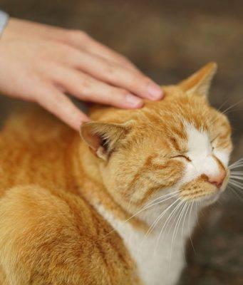 come farsi amare dal gatto