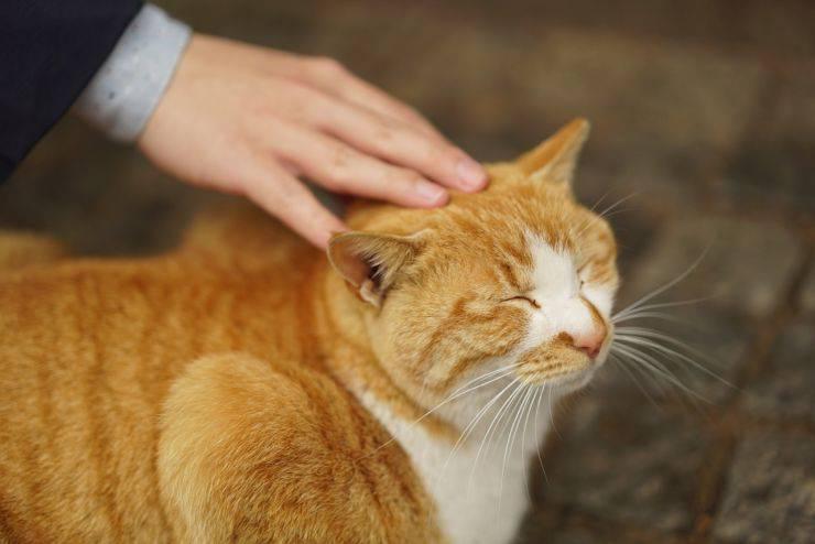 gatto felice sterilizzato