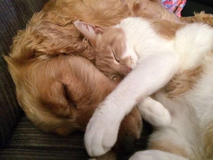 Amicizia cane e gatto