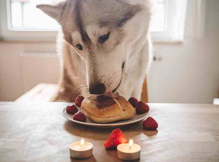 A San Valentino ricette per una cenetta romantica per il tuo cane