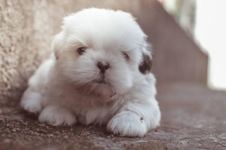 primi giorni cucciolo cagnolino