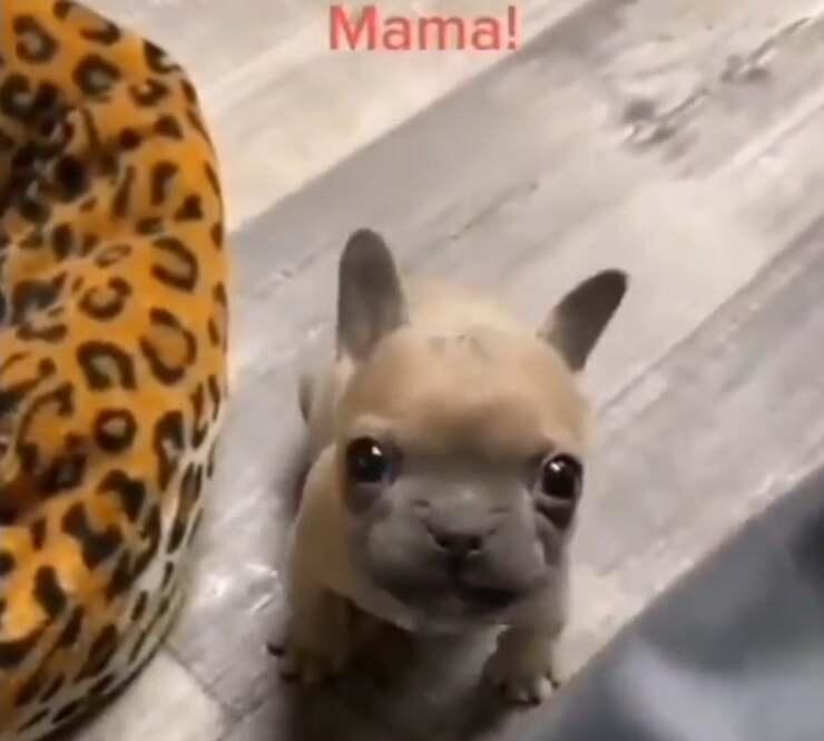 Cucciolo dice mamma