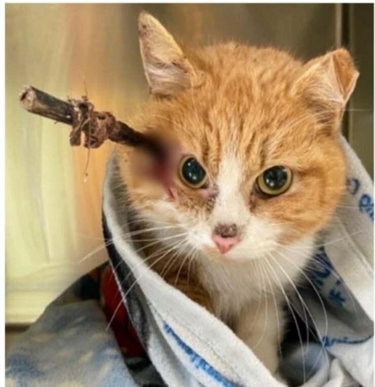 Cupido il gatto con la freccia