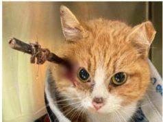 Cupido il gatto trovato il giorno di San Valentino con una freccia