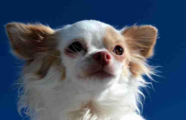 Cucciolo sereno (Foto Pixabay)