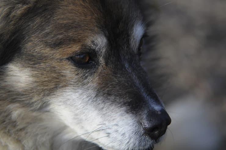 Espressione del cane malinconica (Foto Pixabay)