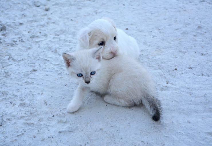 Rachitismo cane e gatto