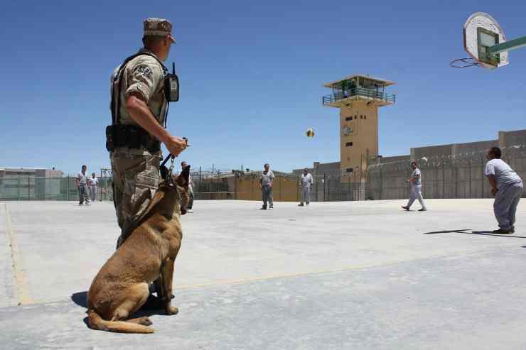 cane sotto addestramento (Foto Pixabay)