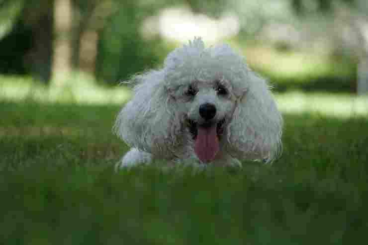 Un allegro cagnolino (Foto Pixabay)