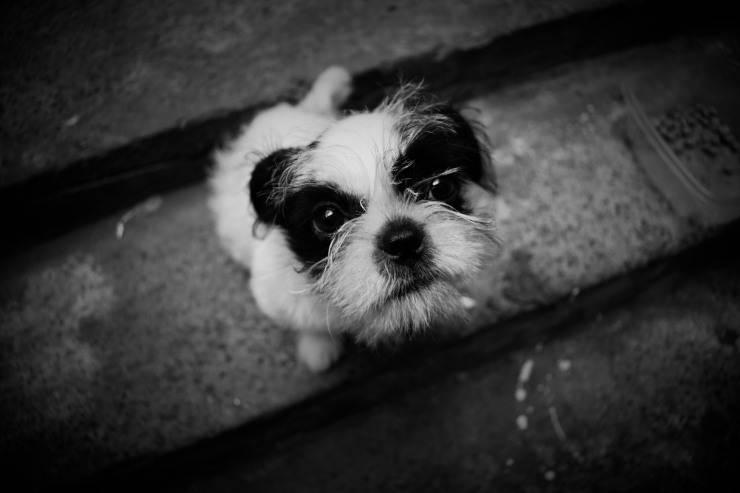 Collare elettrico per cani