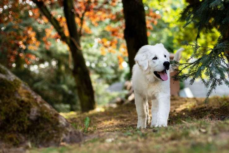 Cucciolo bianco allegro (Foto Pixabay)