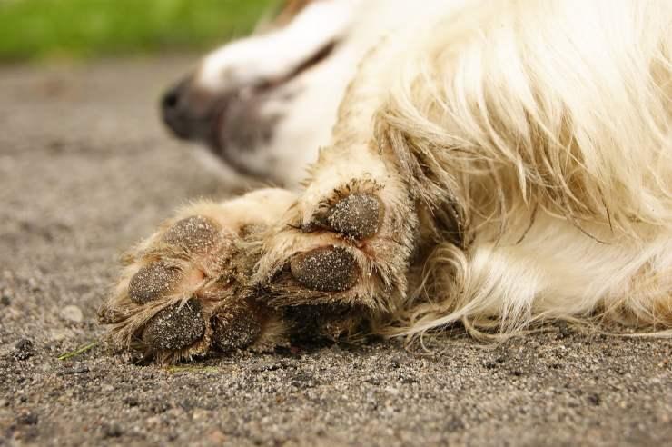 Malattie delle unghie del cane