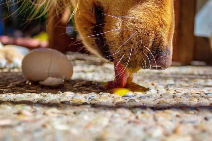 Carenza di calcio nel cane