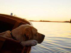 Mal di mare nei cani