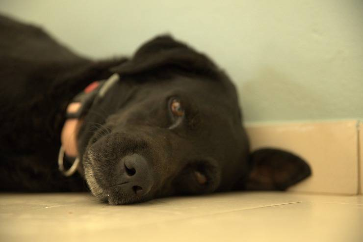 Tagliaunghie per cani, come si usa - Petsblog.it