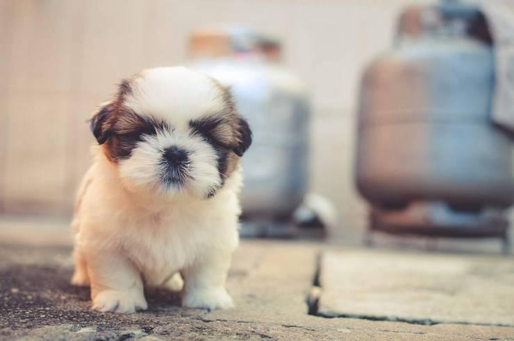 arrivo di un nuovo cucciolo di cane