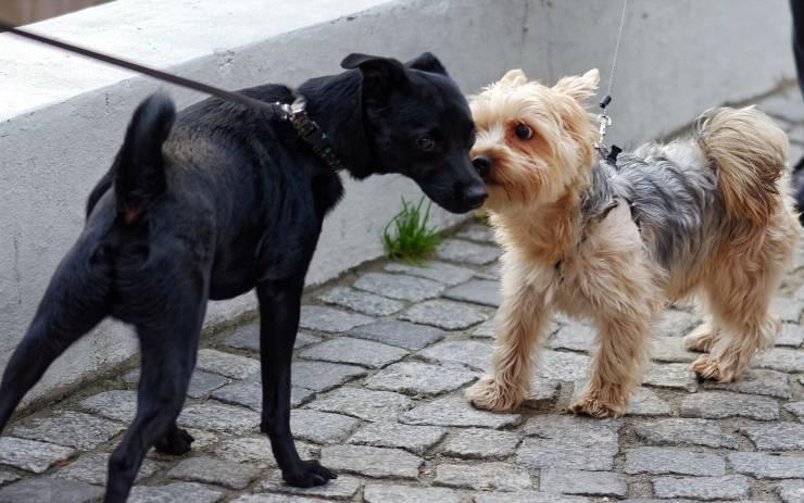 cane annusa cane