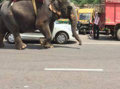 elefante cieco sfruttato